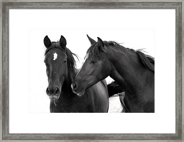 Best Buds Wild Mustang Framed Print