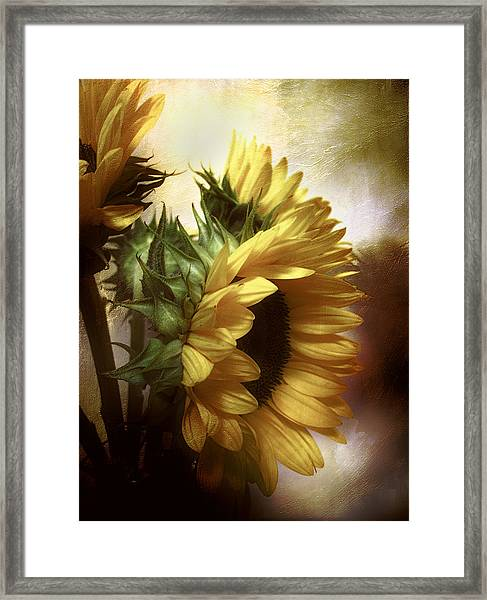 Between The Shadows Framed Print