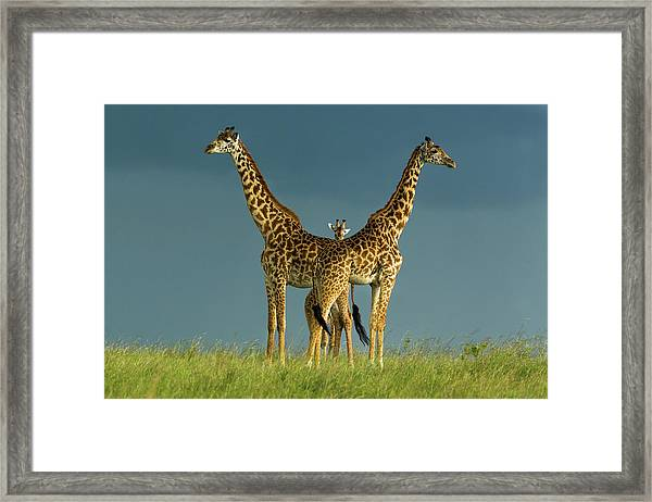 Between The Two Litigants Has The Third Framed Print