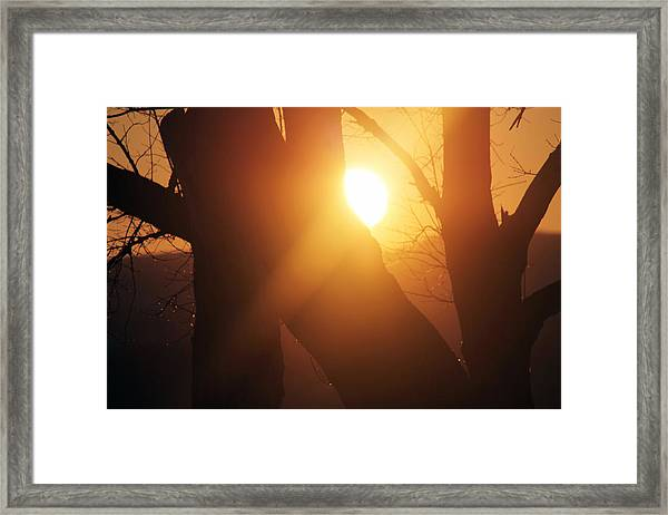 Between Trees Framed Print