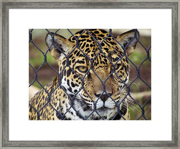 Between You And Me Framed Print by Peggy Bosse