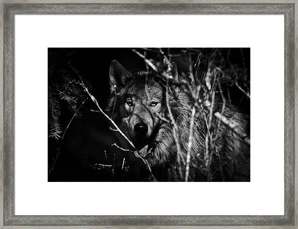 Beware The Woods Framed Print