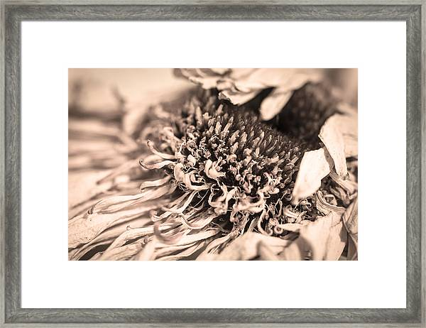 Beyond The Pedals Framed Print