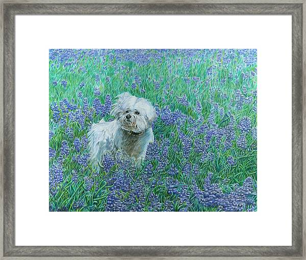 Framed Print featuring the drawing Bichon In The Bluebonnets by Dominic White