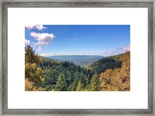 Big Basin Redwoods Framed Print