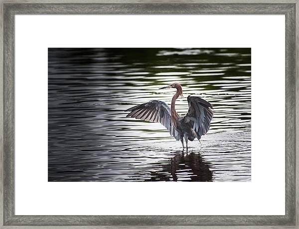 Big Bird Stretch Framed Print
