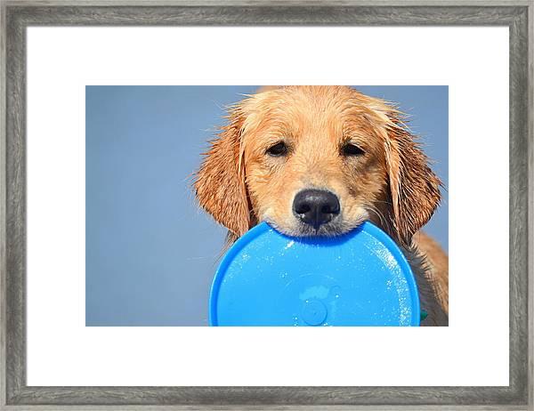 Big Blue Smile Framed Print