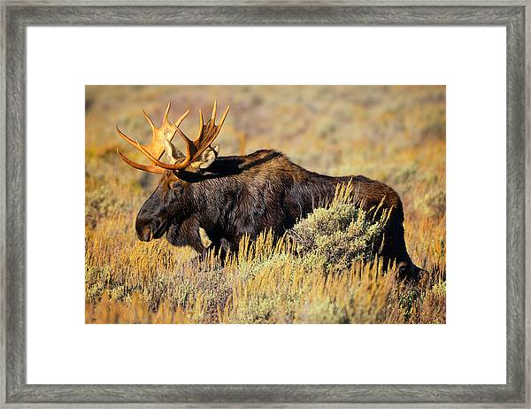 Big Boy Framed Print