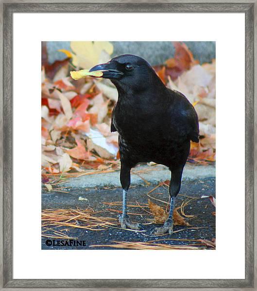 Big Daddy Crow Leaf Picker Framed Print