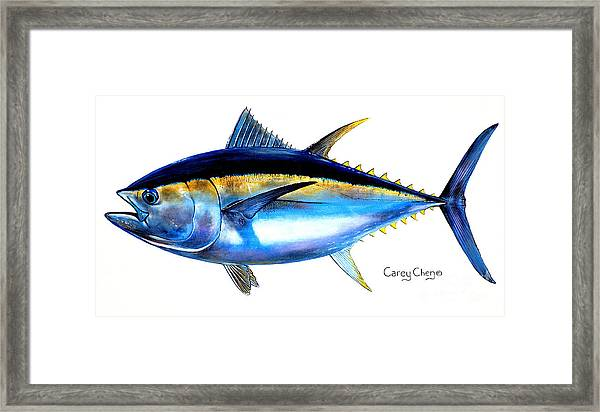 Big Eye Tuna Framed Print