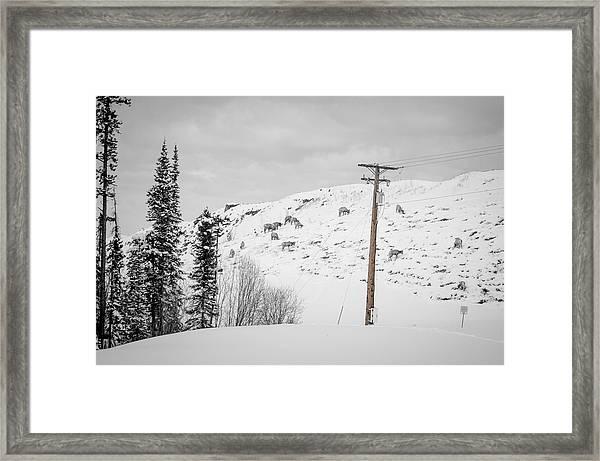Big Horn Sheep Hinton Hillside Framed Print