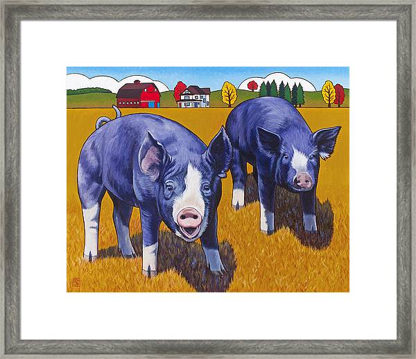 Big Pigs Framed Print by Stacey Neumiller