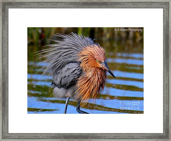 Big Red All Fuzzed Out Framed Print