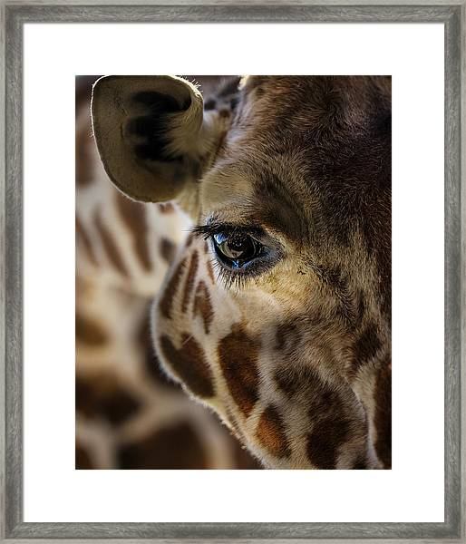 Big Softie Framed Print
