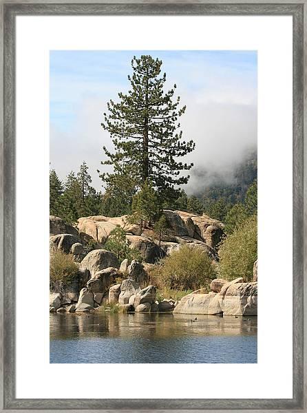 Big Tree In Big Bear Framed Print by Darrin Aldridge