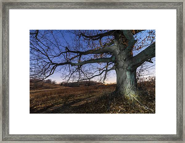Big Wood Framed Print