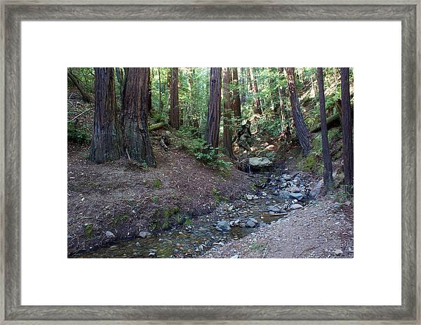 Bigfoot On Mt. Tamalpais Framed Print