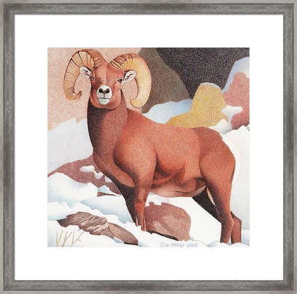 Bighorn Sheep Winter Framed Print