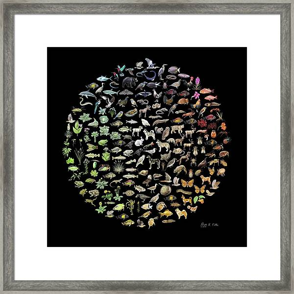 Biodiversity Framed Print by Nicolle R. Fuller