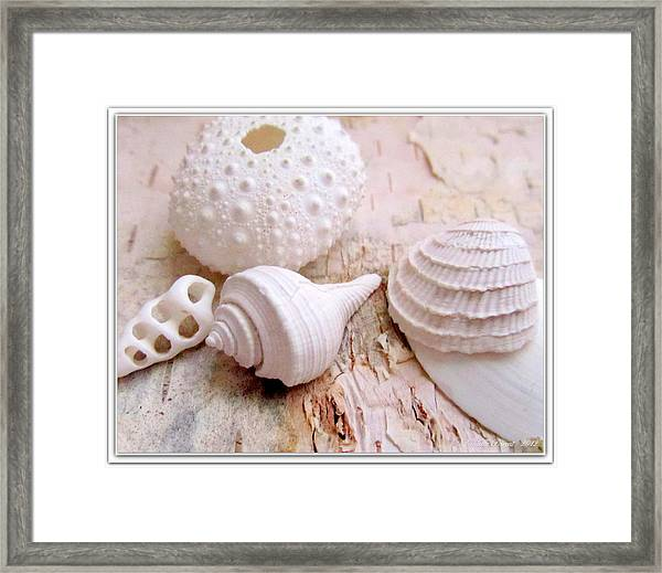 Birch And Shells Framed Print