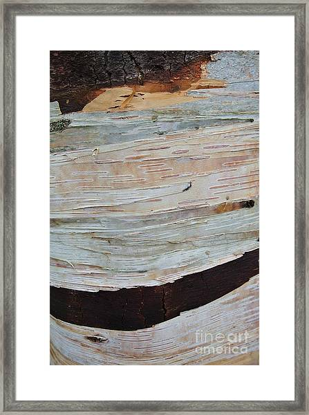 Birch Bark Framed Print