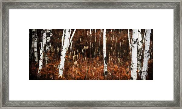 Birch Forest II Framed Print