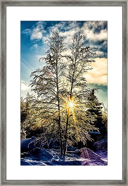 Birch Frost Framed Print
