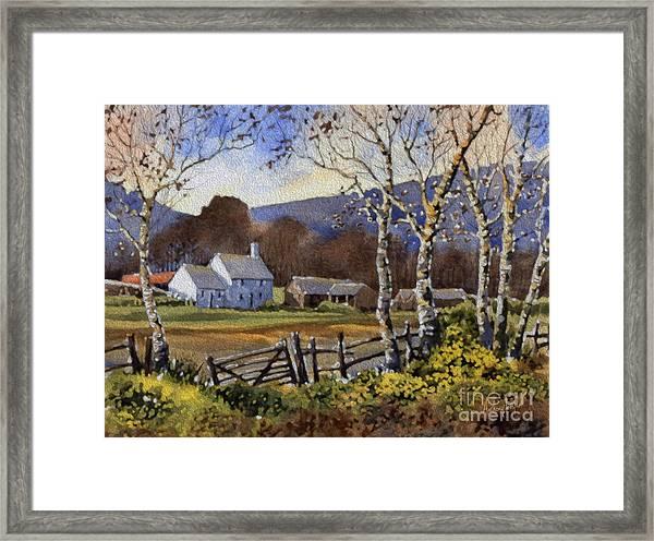 Birch Tree Farm Framed Print