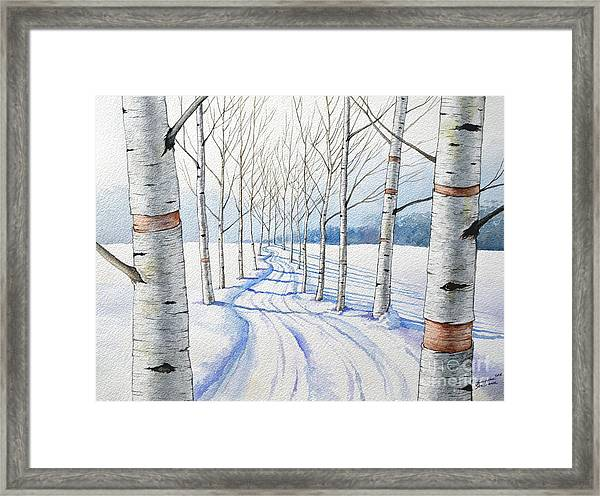 Birch Trees Along The Curvy Road Framed Print