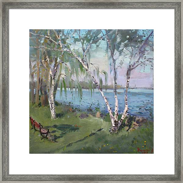 Birch Trees By The River Framed Print