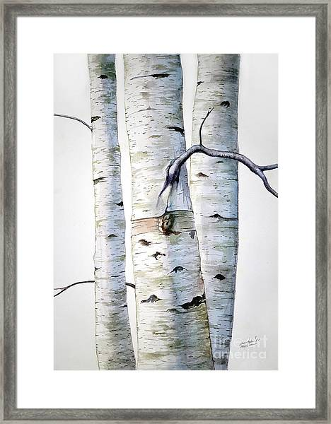 Birch Trees In Watercolor Framed Print
