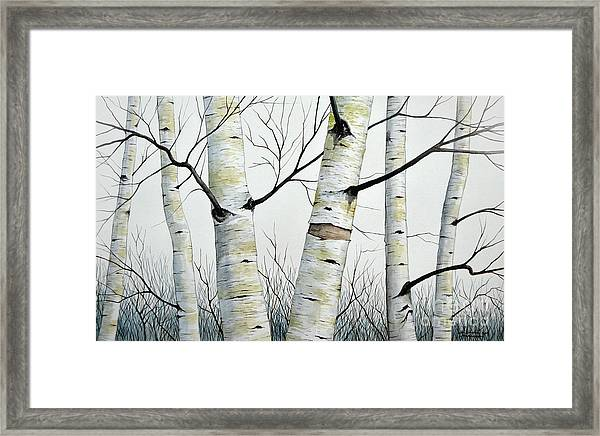 Birch Trees In The Forest In Watercolor Framed Print