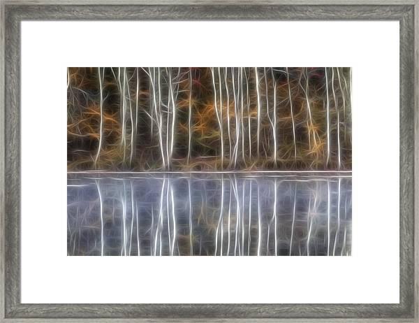 Birch Trees Framed Print