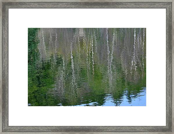 Birch Trees Reflected In Pond Framed Print
