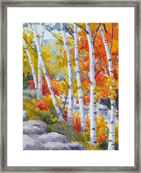 Birches Along The River Framed Print