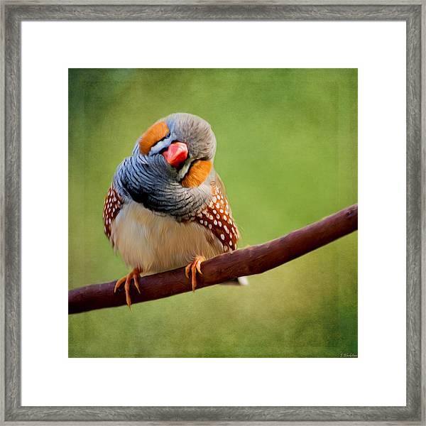 Bird Art - Change Your Opinions Framed Print