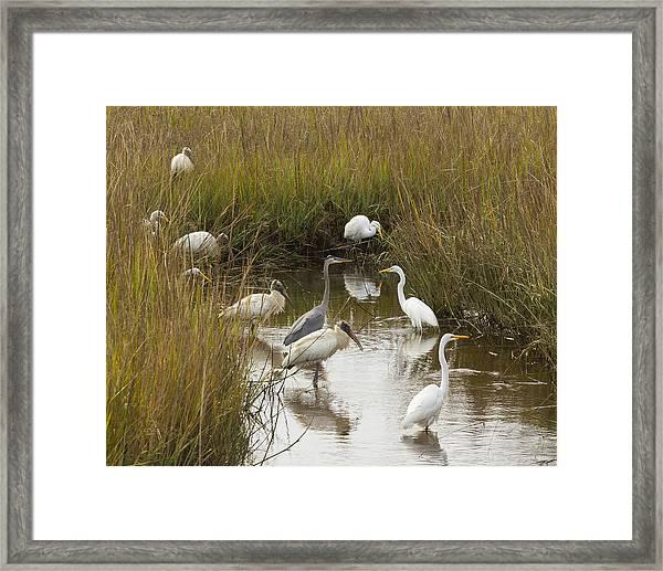 Bird Brunch Framed Print