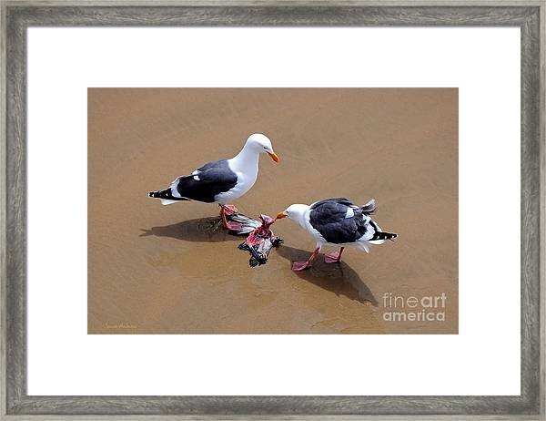 Bird Eats Bird Framed Print