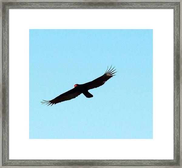 Bird In Flight Framed Print by Van Ness