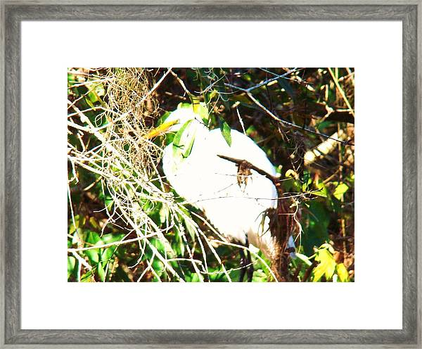 Bird In Mangroves Framed Print by Van Ness
