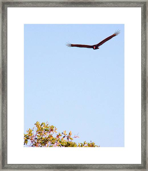 Bird In Pursuit Framed Print by Van Ness