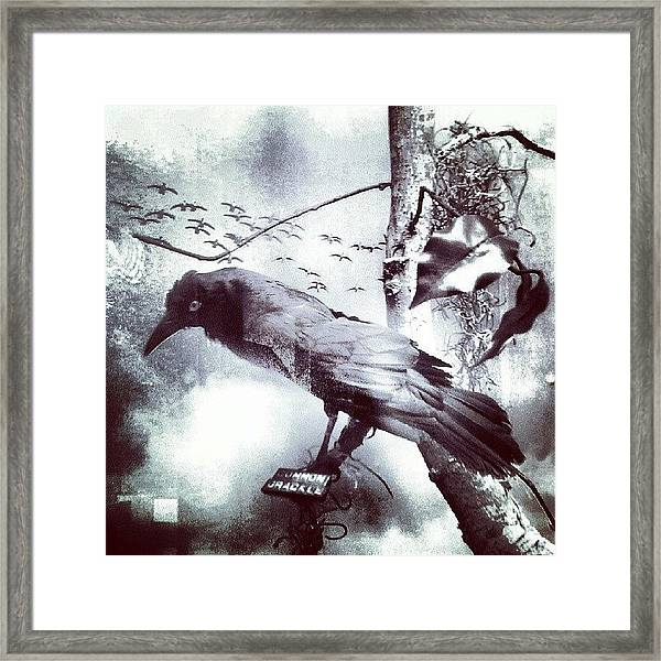 #bird Looking For #birdbath . #surreal Framed Print