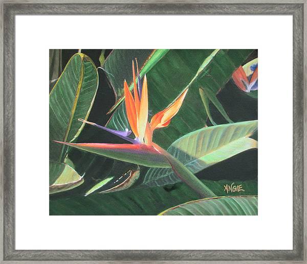 Bird Of Paradise 2 Framed Print