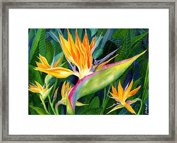 Bird-of-paradise Framed Print