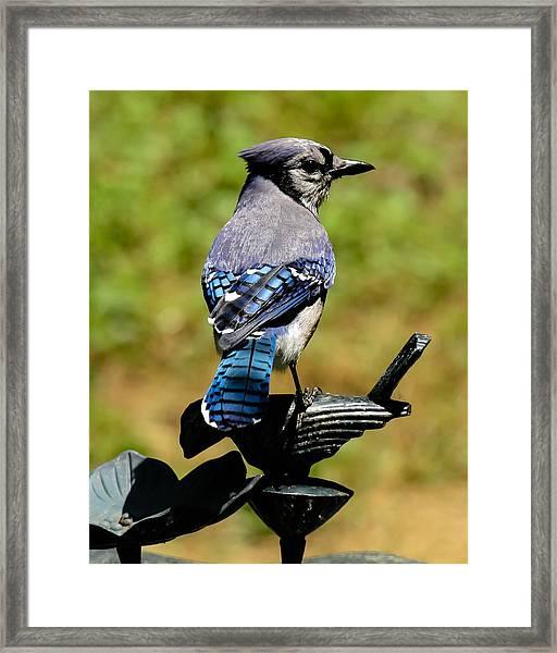 Bird On A Bird Framed Print
