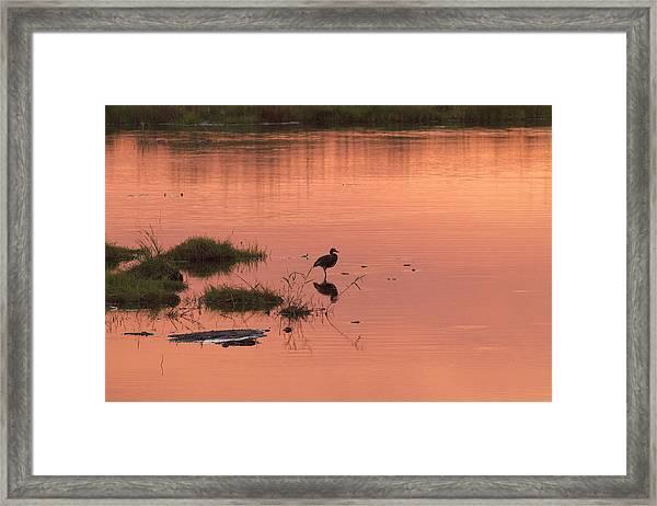 Framed Print featuring the photograph Bird Silhouette  by Gigi Ebert