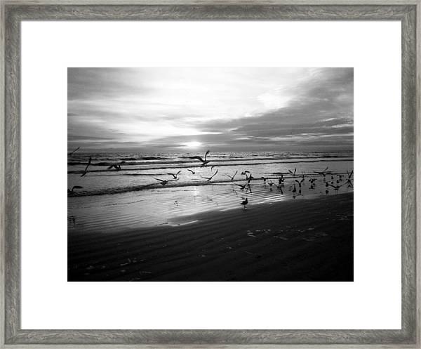Birds At Sunrise Bw Framed Print