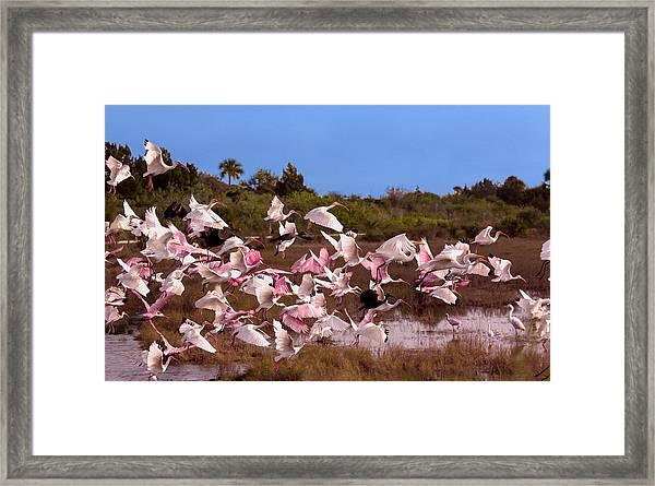 Birds Call To Flight Framed Print