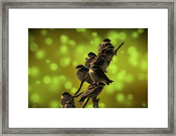 Birds Of A Feather Framed Print