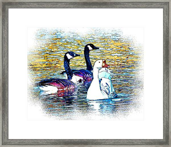 Framed Print featuring the photograph Birds Of A Feather by William Havle